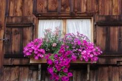Blumenfenster-an-der-Scheune-1