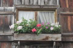 Blumenfenster-an-der-Scheune-2