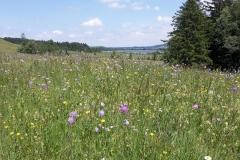 Blumenwiese-vor-dem-Bannwaldsee