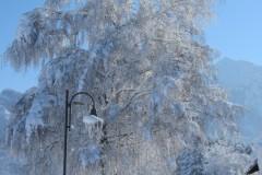 Straße-hinterm-Haus-im-Winter